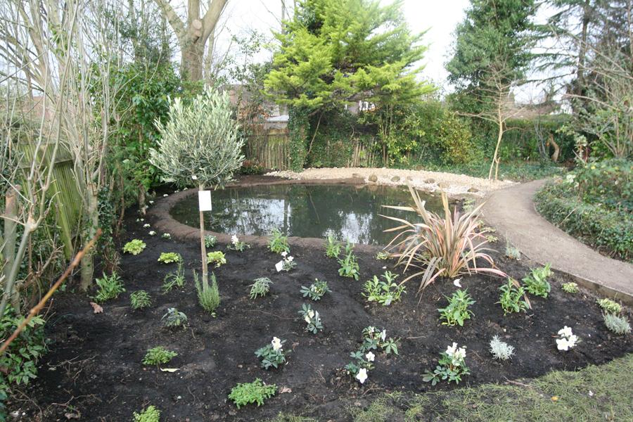 Wildlife Garden Ponds Surrey