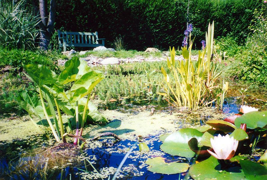 Wildlife Garden Design Purley