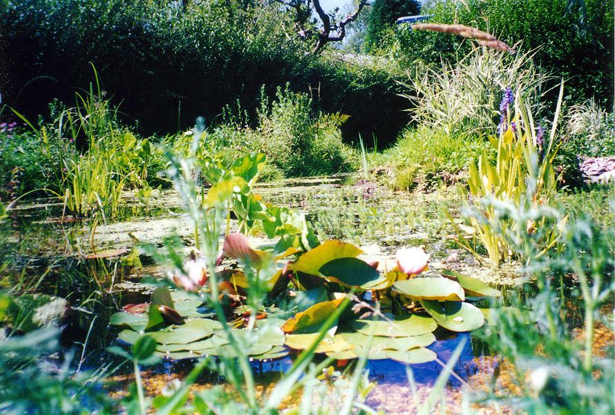 Landscape Ponds Surrey