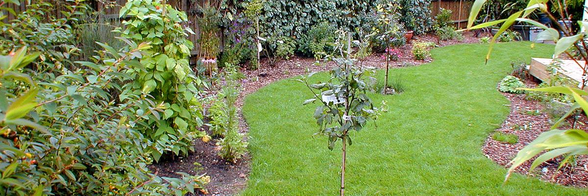 Large Garden Landscaping Wimbledon