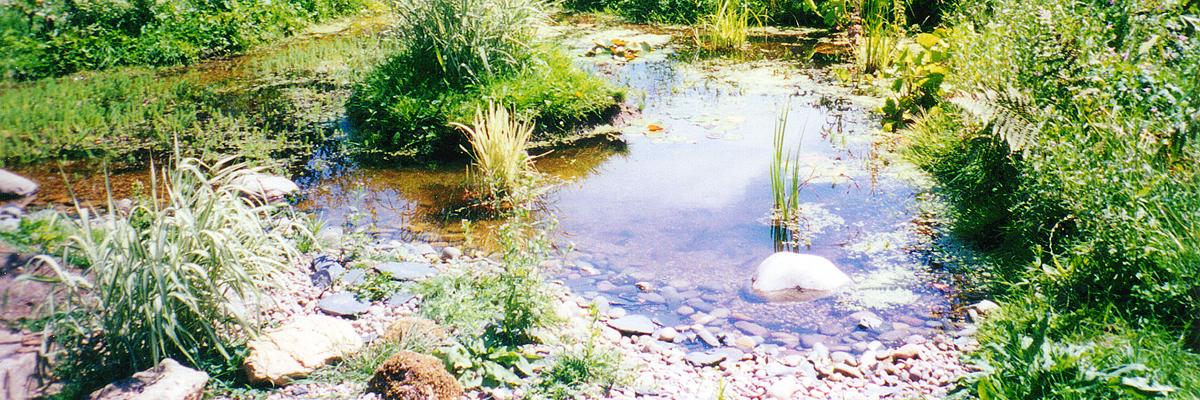 Wildlife-Pond-Wide
